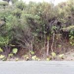 Cables on Piha roadside