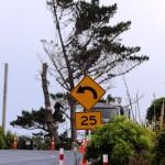 Pines01