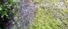 Raw sewage in Piha