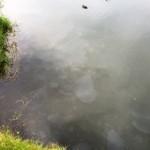 Sewage05